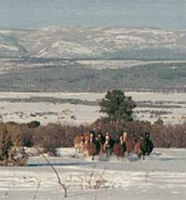 J2F Guest Ranch - Horses Running in Snow
